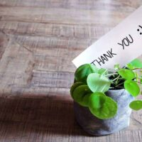 Potted plant thank you gift for teacher