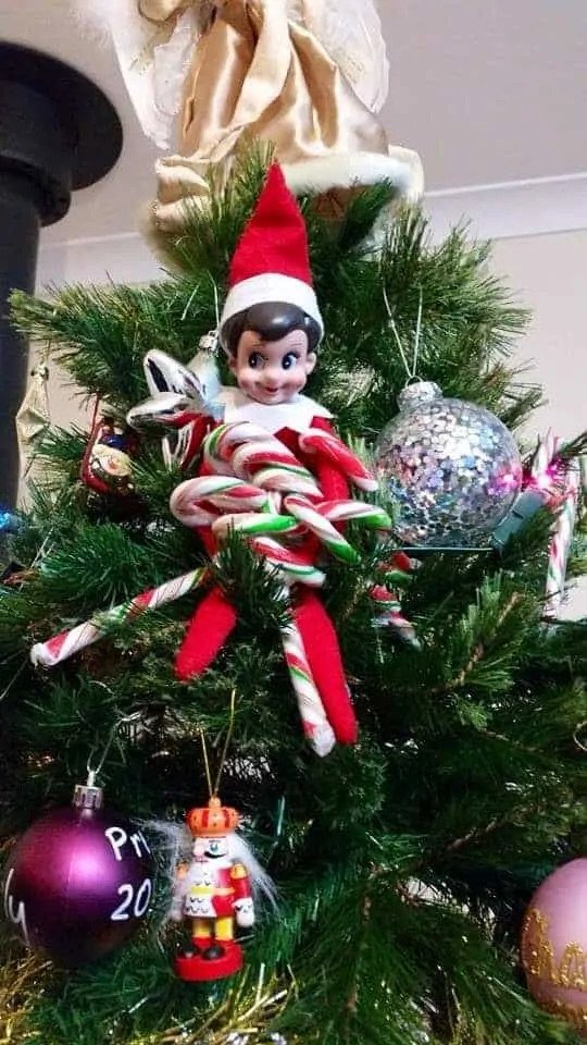 Elf stole candy canes